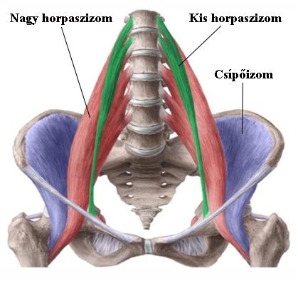a csípőízület fájdalom az erőkifejtés során