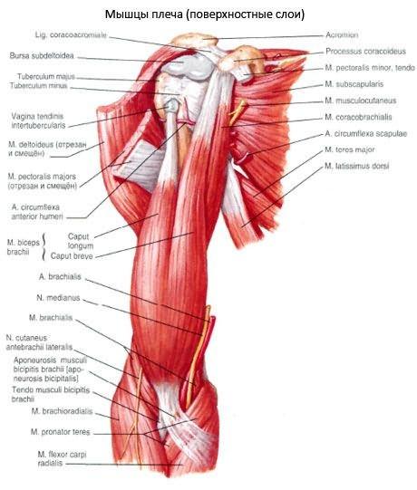a vállízület deformáló artrózisának kezelése a bokaízület artrózisa 2 fokos előrejelzés