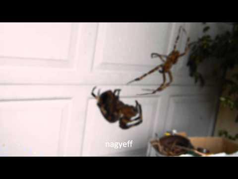 Valami mocorog a tányéron - Ehető rovarok