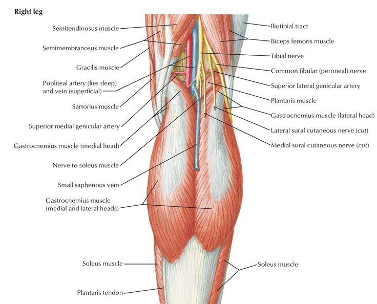poplitealis arthritis