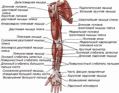 Vállban fájdalmas fájdalom - Könyök