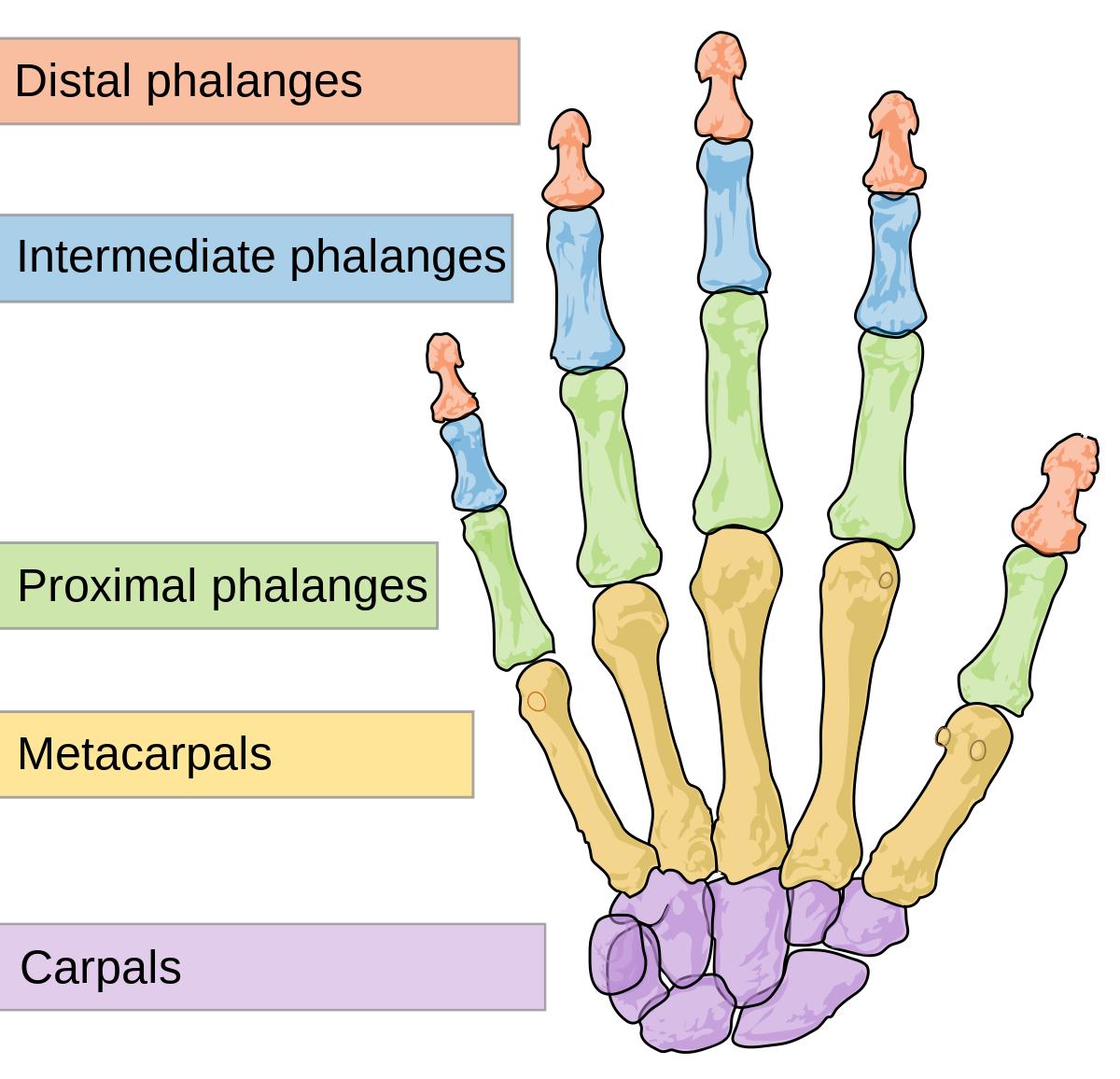 ízületi gyulladás hüvelykujj ízületi gyulladása