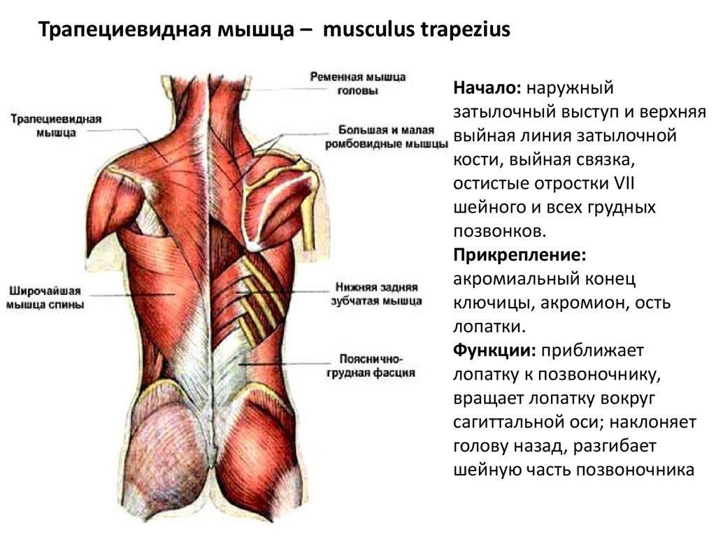 movalis a vállízület fájdalma