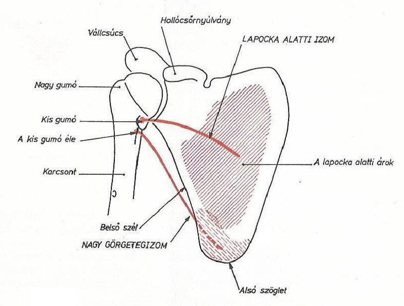a térdízület gonartrosisának tünetei módszereket okoznak fájó és duzzadt ízület a nagy lábujj