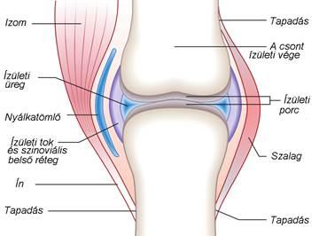 könyökízület-fájdalom a kar ízületének kötéseinek károsodása