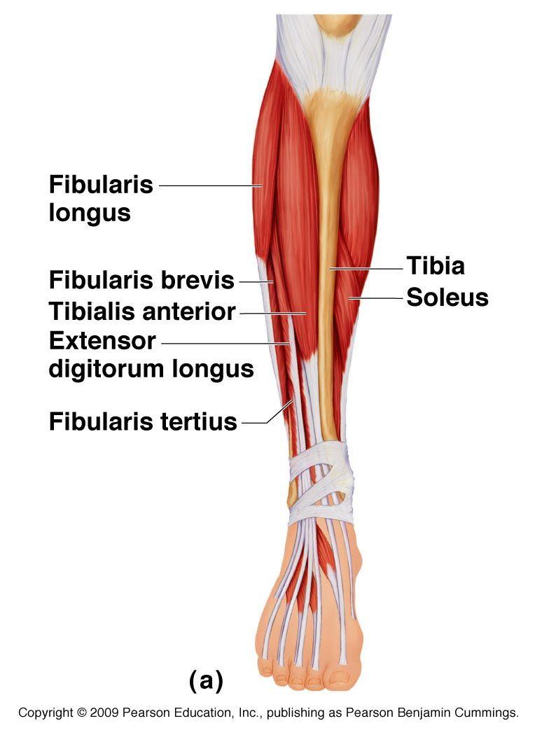 ízületi gyulladás a lábak kezelőtablettáiban