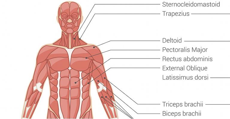 gyakorlatok a vállízület fájdalmának kiküszöbölésére izomfájdalom ízületi fájdalom
