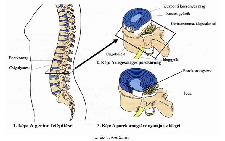 gerinc és ízületek fájdalmának összekapcsolása ízületi fájdalom és kiütés felnőttnél