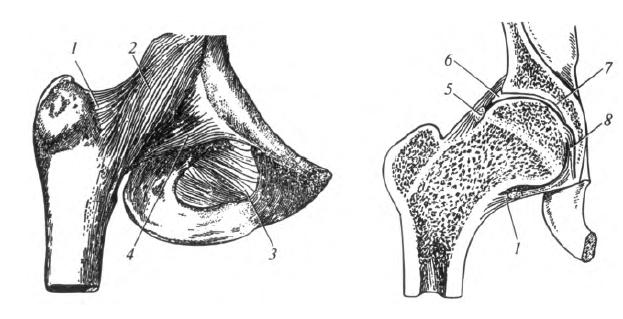 kötőszövet-betegség szindrómák térdbetegségek nevei
