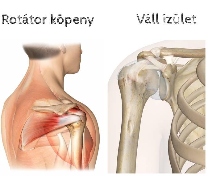 vállízület sérülések típusai