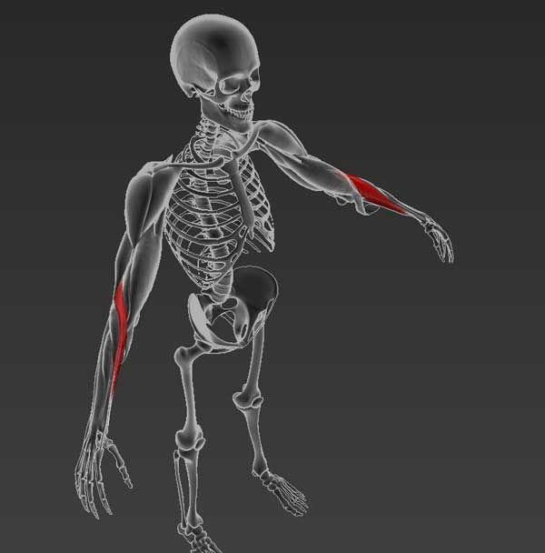 Reumatológia, ortopédia jegyzet | caremo.hu