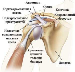 a vállízület deformáló artrózisának kezelése a könyökízület bursitisének kezelése dimexidummal