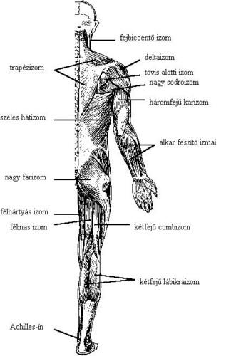a bal csípőízület sérülése