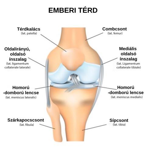 a lábak ízületei és izmai fájnak, mint kezelték hátsó kenőcsök csontritkulásos