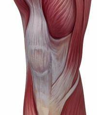 A térdcsukló mediális meniszkuszának szarva szakadása - kezelés, tünetek, a sérülés teljes elemzése