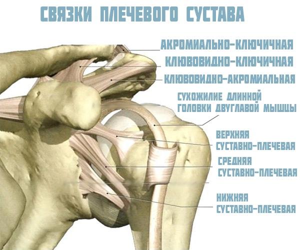 gyógynövények az ízületi sérülések kezelésére mikoplazmózis és ízületi fájdalmak