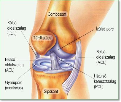 Térdkalács (patella) körüli fájdalom   caremo.hu – Egészségoldal   caremo.hu