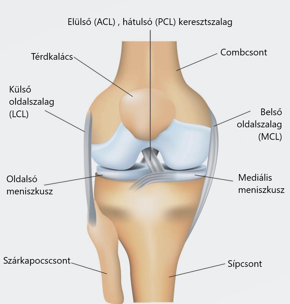 meniszkusz sérülés térd tünetei