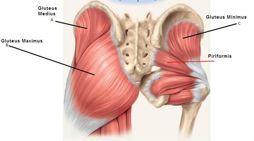 fájdalom a csípőízület kötőelemeiben ujjak ízületeinek betegségei