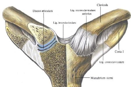 krém az izmok és ízületek fájdalmához fájó térdízületi ízületi gyulladás