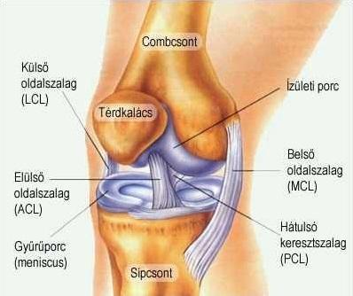 segítség a térd kezelésében csontvelő ödéma a térdízületben