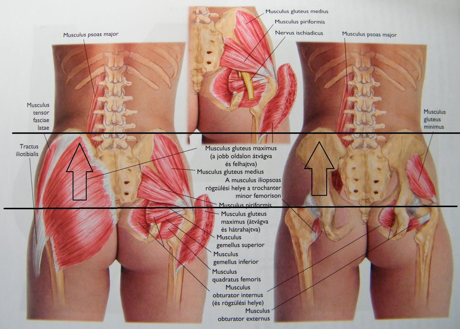 csípőizom fájdalom ha fáj a vállízületek, mit kell tenni