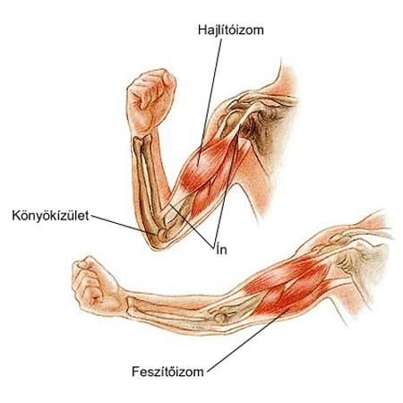 fájdalom a könyökízület benyomásakor váll ligamentum sérülések kezelése