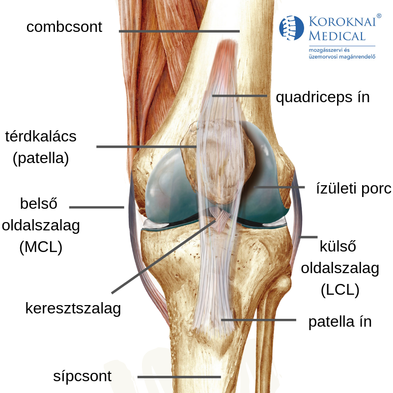 fájdalom a láb felső részének ízületében