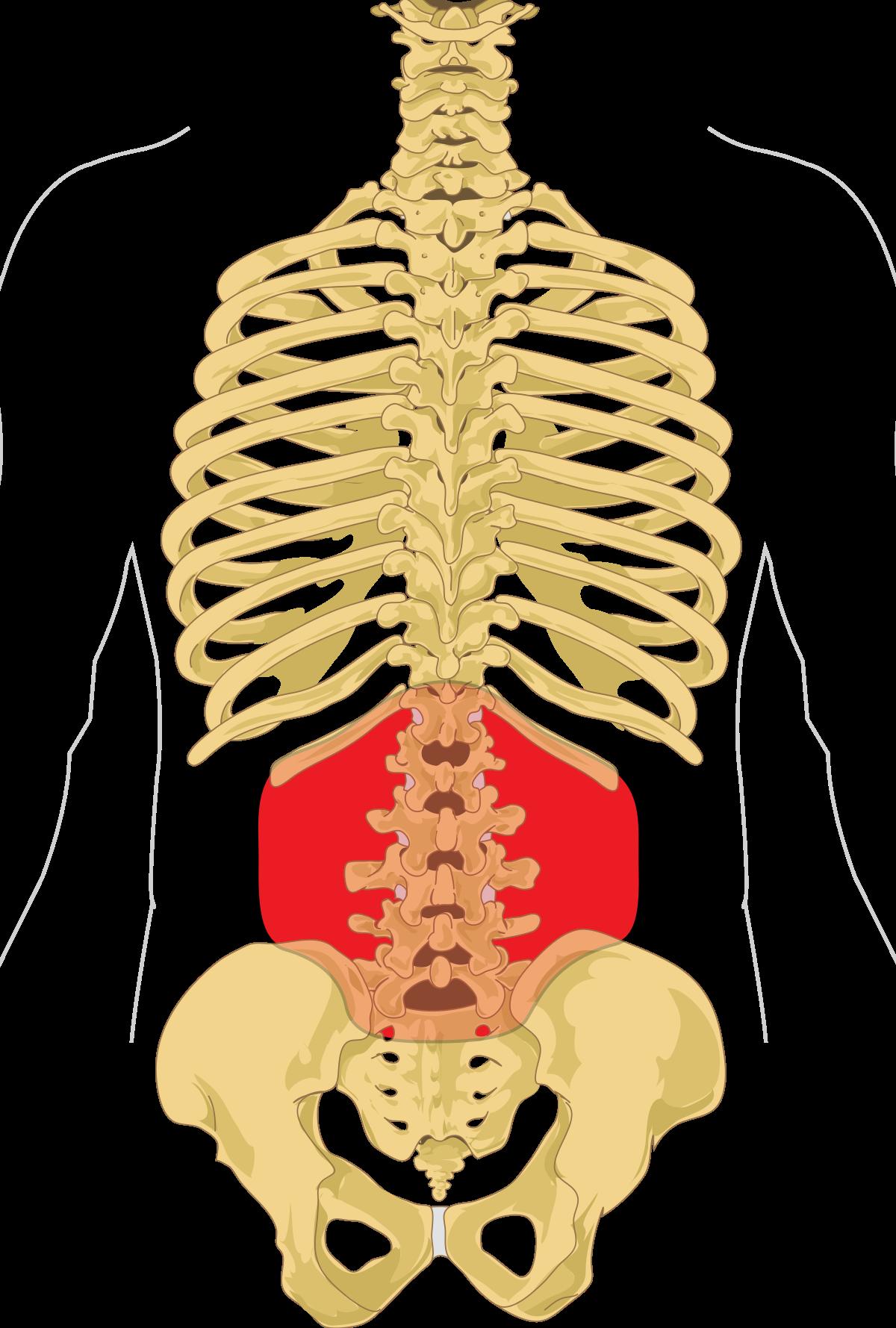 fájdalom az alsó hát ízületében melyik orvos