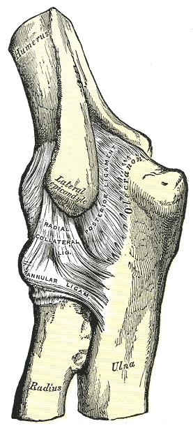 összeroppant fájdalom a vállízületben nem-gerincös ízületi gyulladás kezelése