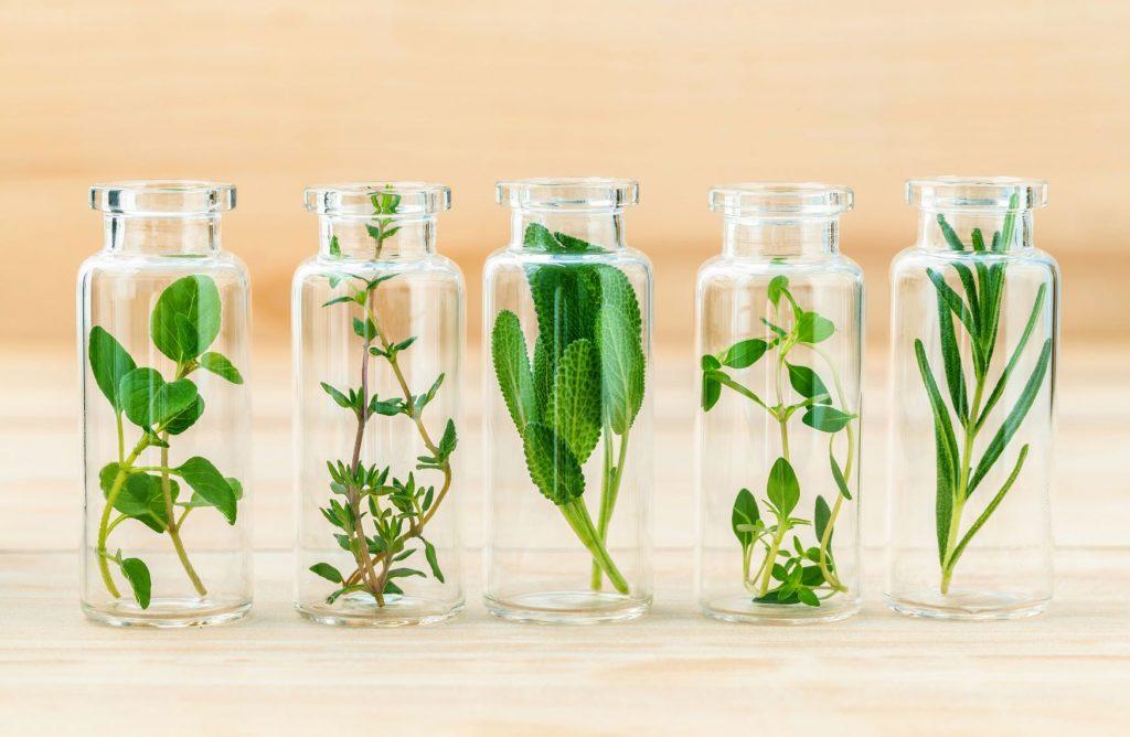 Gyógynövények és növények prosztatagyulladáshoz Kalanchoe.