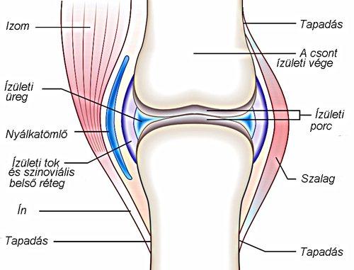hogyan kell kezelni a csípőízület ízületeit