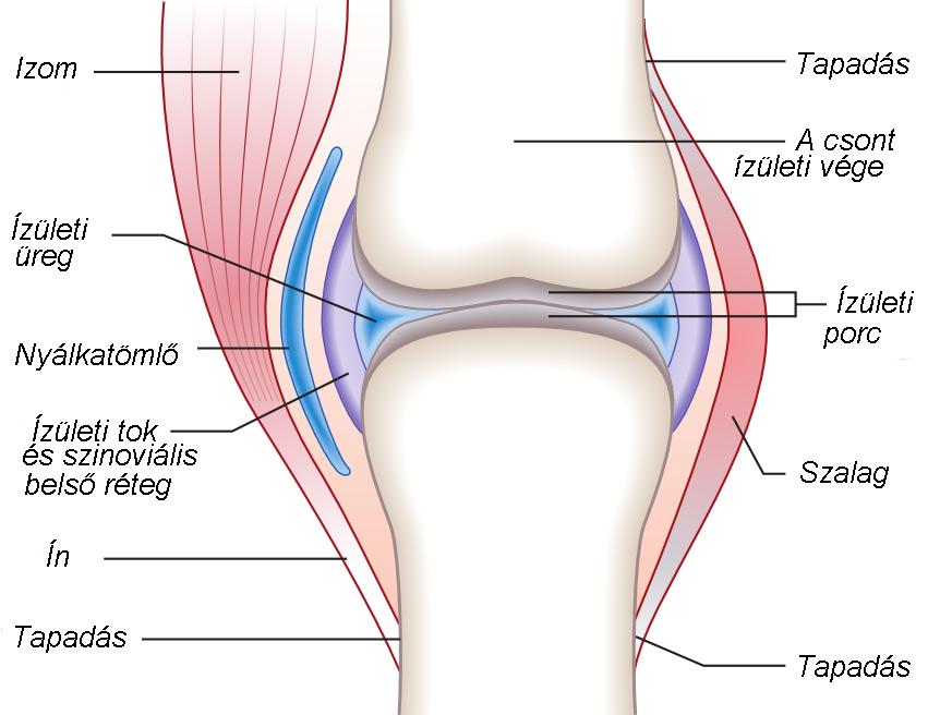 általános artrózis kezelése ellipszoid térd artrózisához