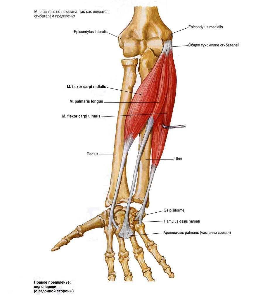 mi a helyzet a vállízület artrózisával csípőízület gyulladása