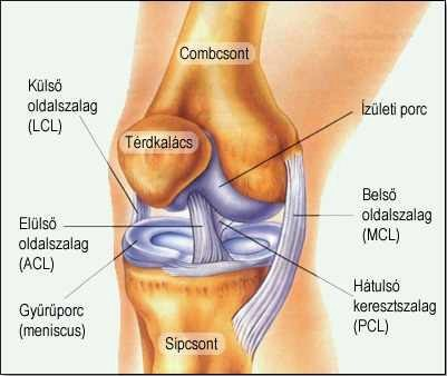 fájdalom a felső láb ízületeiben a vállízületek ízületi osztályozása
