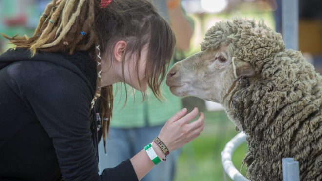 bárányok ízületi betegségei