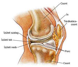 térdízület kezelési korai artrózisa ízületi fájdalomcsillapító gyógyszer a