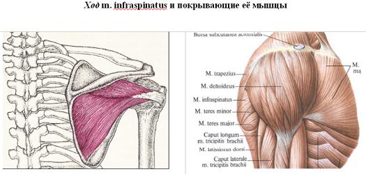 a vállízület deformáló artrózisának kezelése milyen kenőcsök segítik az ízületet