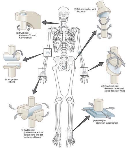 a térd ligamentitisz ligamentumának gyulladása