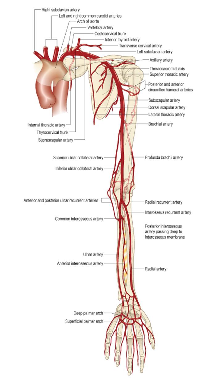 Részletes utasítások a felhasználáshoz Artrozana
