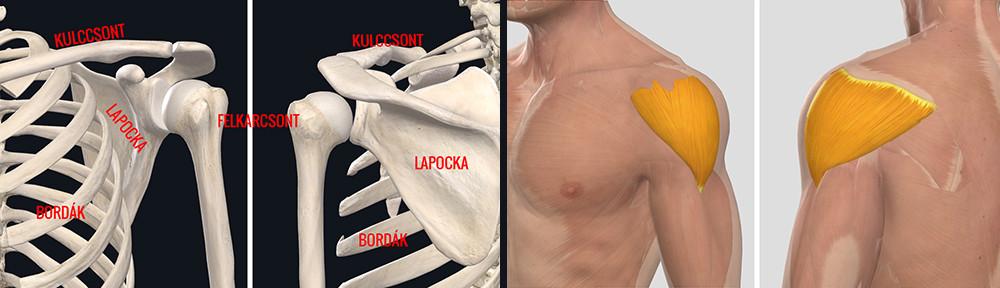 fájdalom a gerinc könyökéjén ízületi gyulladás 1-2 fokos kezelés