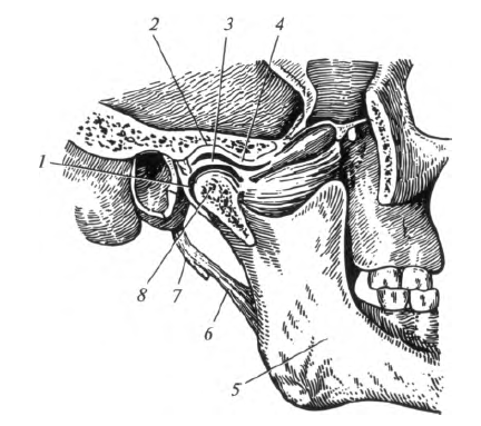 Atlanto-occipitalis ízület, mozgás ebben az ízületben.