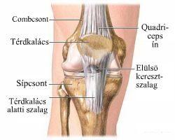a könyök ízületének szalagjai sérülésének jelei összeroppant a láb ízületét és fáj