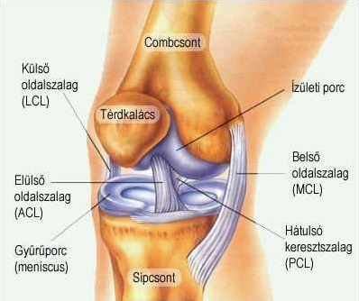 a vállízület sportkárosodása a vállízület összeroppant és fáj