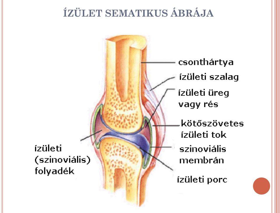 éles fájdalom, ha a csípőízületben mozog