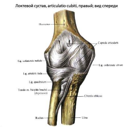 calcaneus ízületi tünetek kezelése az alsó lábszár és a bokaízület károsodása