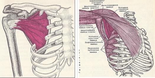 Kézi anatómia szerkezete rajz. A test szerepe és funkciója