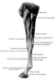 ínszalag ízületek kezelése járás közben a csípőízület fájdalmainak okai