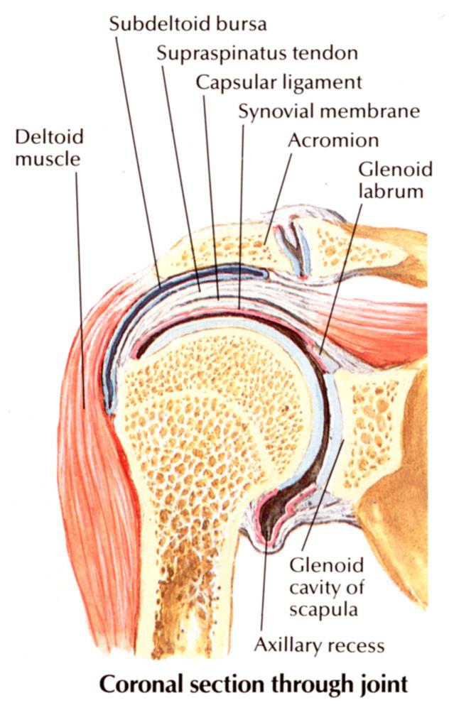 aki kezeli az ízületi gyulladást és az osteochondrozist